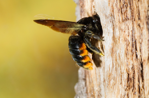 A bee entering it's hive.